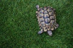 La tortue demeure vue d'en haut Photographie stock libre de droits