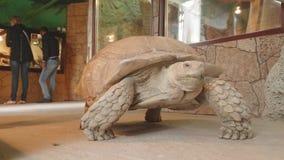 La tortue se déplace sur le territoire de l'exotarrium où promenade de personnes près de elle clips vidéos