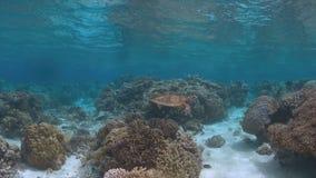 La tortuga de Hawksbill nada en un arrecife de coral Foto de archivo libre de regalías