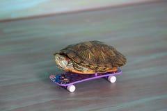 La tortuga de la mano está montando un monopatín Fotos de archivo