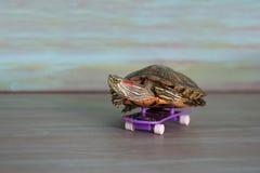 La tortuga de la mano está montando un monopatín Imagenes de archivo
