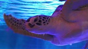 La tortuga de mar nada en acuario Bangkok Oceanarium, Tailandia almacen de metraje de vídeo