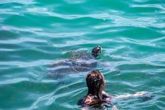 La tortuga de mar resalta su cabeza del agua imagen de archivo libre de regalías