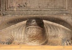La tortuga del doctor, Hanoi fotos de archivo libres de regalías