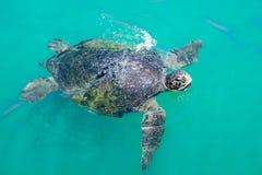 La tortuga en el océano azul saca de su cabeza el agua imagenes de archivo