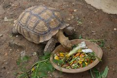 La tortuga más vieja está en el parque zoológico. Imagenes de archivo