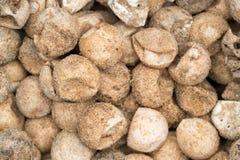 La tortuga secada eggs con la arena en la playa fotografía de archivo libre de regalías