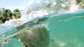 La tortuga sigue 4k a cámara lenta subacuático almacen de video