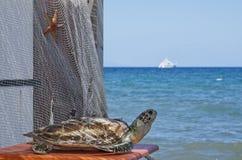 La tortuga y el barco Fotografía de archivo
