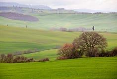La Toscana Immagine Stock