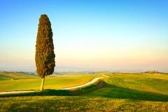La Toscana, albero di cipresso solo e strada rurale. L'Italia immagine stock
