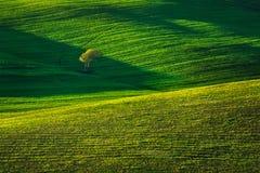 La Toscana, albero e campi verdi sul tramonto Siena Creta Senesi, I fotografie stock