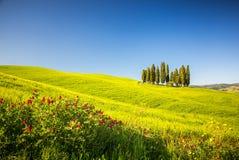 La Toscana alla molla Immagine Stock Libera da Diritti