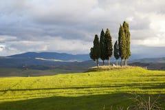 La Toscana Cypress Fotografia Stock