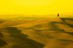 La Toscana gialla Immagini Stock