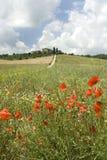 La Toscana magica immagini stock libere da diritti