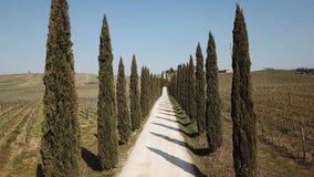 La Toscana, paesaggio aereo di un viale del cipresso vicino alle vigne stock footage