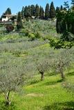 La Toscana - paesaggio con il campo verde oliva Immagini Stock Libere da Diritti