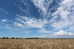 La Toscana, paesaggio, Italia Immagine Stock Libera da Diritti