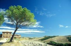 La Toscana tipica Fotografie Stock Libere da Diritti