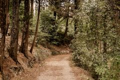 La Toscana - una traccia di Hillside vicino al Archabbey di Monte Oliveto Maggiore immagine stock