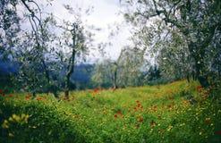 la Toscane images libres de droits