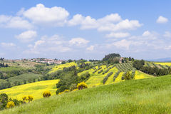La Toscane au printemps Images libres de droits