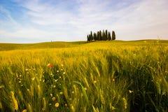 La Toscane, champ de pré avec des arbres de cyprès Photographie stock libre de droits