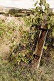 La Toscane - Hillside Vinyard donnant sur la ville d'Asciano photos stock