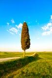 La Toscane, l'arbre de cyprès isolé et la route rurale Sienne, vallée d'Orcia Image libre de droits