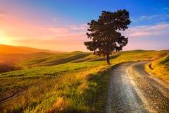 La Toscane, l'arbre isolé et la route rurale sur le coucher du soleil Volterra, Italie Image stock