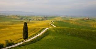 La Toscane - le Cypress Photos libres de droits