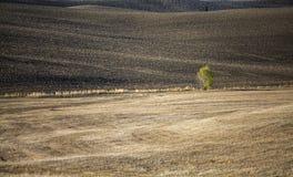 La Toscane - panorama, collines et pré de paysage Photos stock