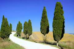 La Toscane, route rurale blanche Italie d'arbres de Cypress photos stock