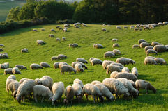 La Toscane rurale Photo stock