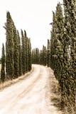 La Toscane - un Strada typique Bianca Near Asciano image libre de droits