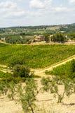 La Toscane - vignobles de chianti et oliviers, photo stock