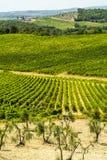 La Toscane - vignobles de chianti et oliviers, images stock