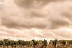 La Toscane - vignobles sur les pentes de la ville de Hillside de Montalcino image stock