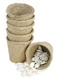 La tourbe met en forme de tasse des graines de citrouille Images stock