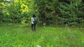 La touriste de femme avec un sac à dos entre dans le tir de forêt du dos banque de vidéos