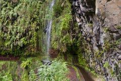 La traînée chez Levada font Rei par une forêt antique de laurier Photo stock
