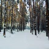 La traînée dans la forêt images libres de droits