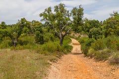 La traînée dans la forêt Santiago d'arbre de liège font Cacem Images stock