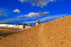 La traînée dans les montagnes en Himalaya Photo libre de droits