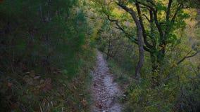 La traînée de forêt en automne, ombres des arbres semblent indiquer un chemin image libre de droits