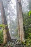 La traînée de Kumano Kodo, une traînée sacrée dans Nachi, Japon image libre de droits