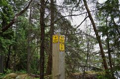 La traînée jaune signent dedans la forêt tropicale photos stock