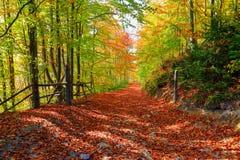 La traînée large couverte de feuilles tombées Image stock
