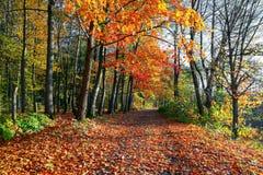 La traînée large couverte de feuilles tombées, des côtés dont élevez les arbres avec les feuilles toujours vertes et déjà jaunes Photos stock